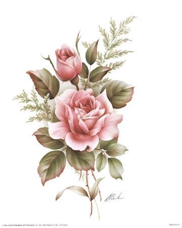 360x450 Rose Pencil Drawings, Rose Drawings, Drawing Of A Rose
