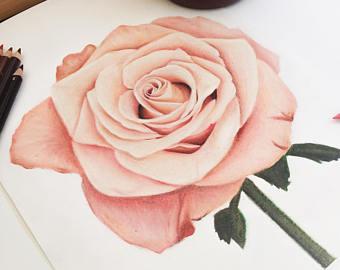 340x270 Rose Drawing Etsy