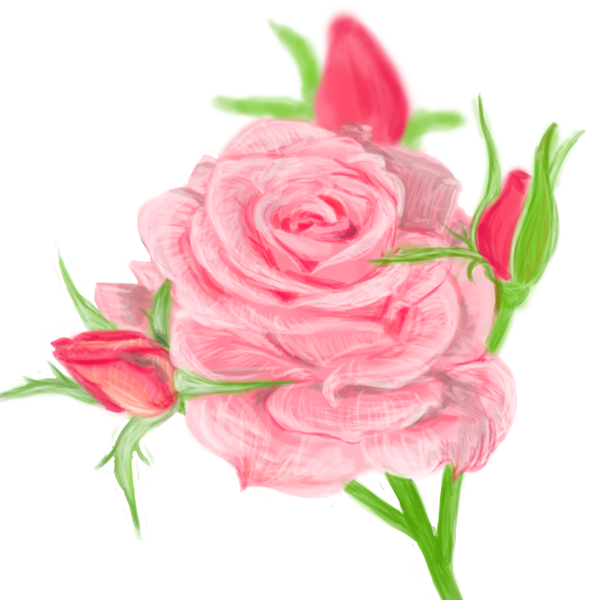 600x600 Pink Rose Layon's A Drawing A Day