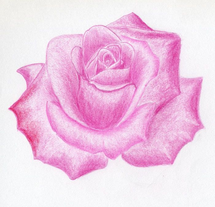 700x672 Rose Images How To Draw A Rose