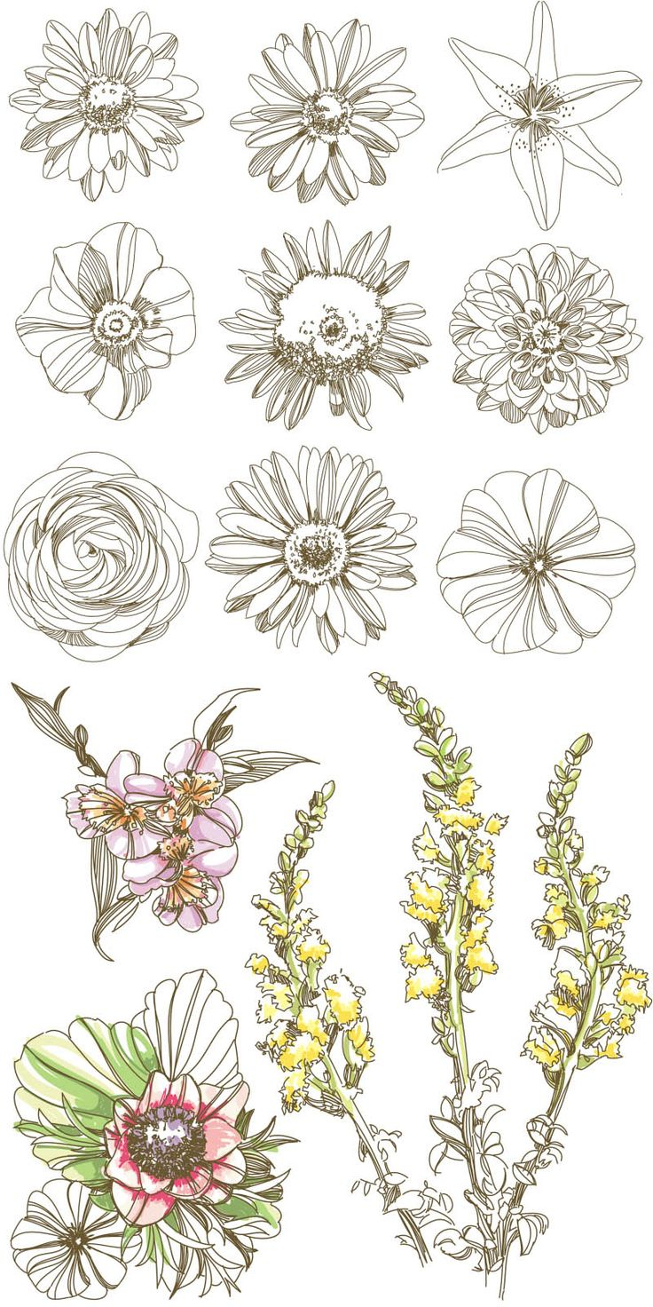 736x1472 Simplified Flower Drawings From India 459 Best Images