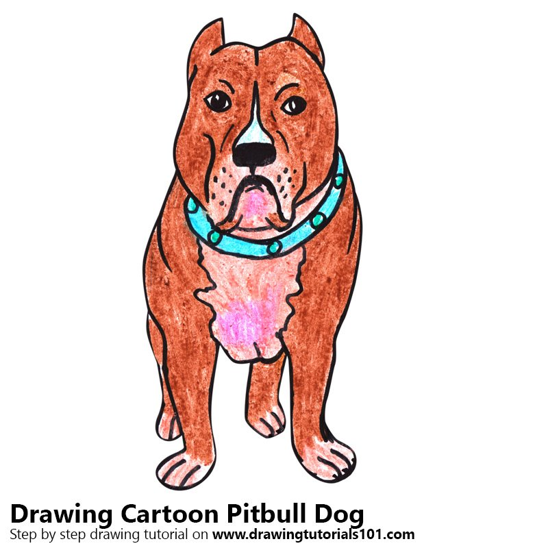 800x800 Learn How To Draw A Cartoon Pitbull Dog (Cartoon Animals) Step By
