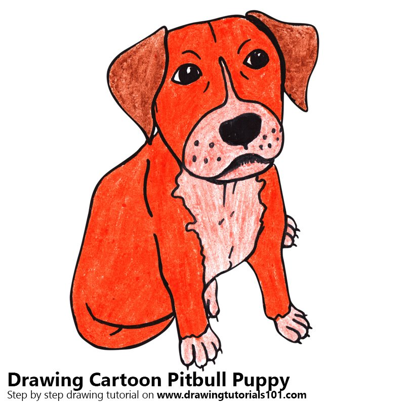 800x800 Learn How To Draw A Cartoon Pitbull Puppy (Cartoon Animals) Step