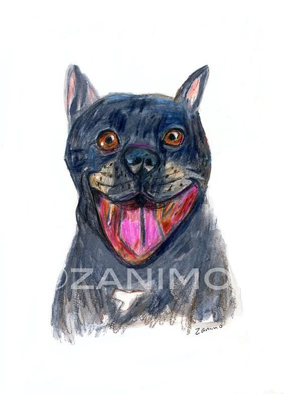 570x785 Black Pitbull No.1 Smiling Dog Drawing Of A Rescue Fine By Zanimo