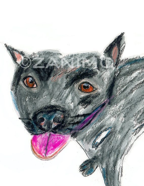 570x738 Black Pitbull No.2 Smiling Dog Drawing Of A Rescue Fine By Zanimo