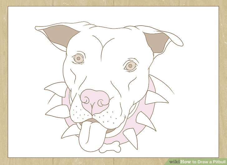 728x529 How To Draw A Pitbull (With Pictures)