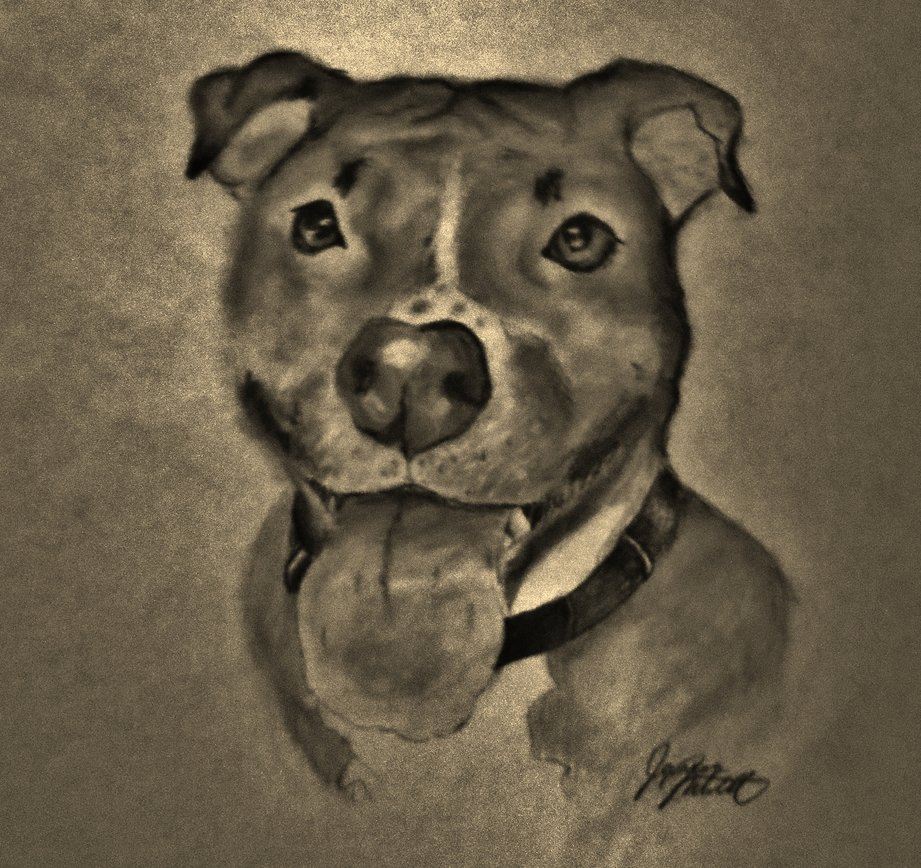 921x868 Pit Bull Pencil Drawings Pitbull Dog By Jaylynessa