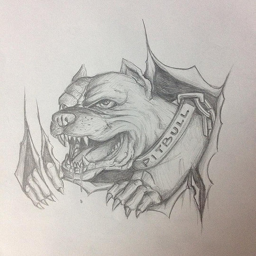 500x500 Pitbull Sketch For Our Next Project On A Harley Tank