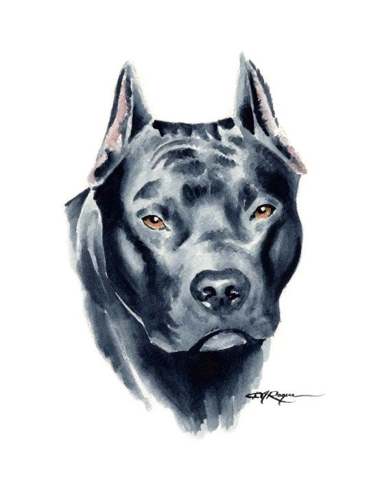 570x714 View Source Image Pit Bull Drawingsart View