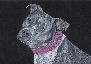 300x212 Pitbull Drawings Fine Art America