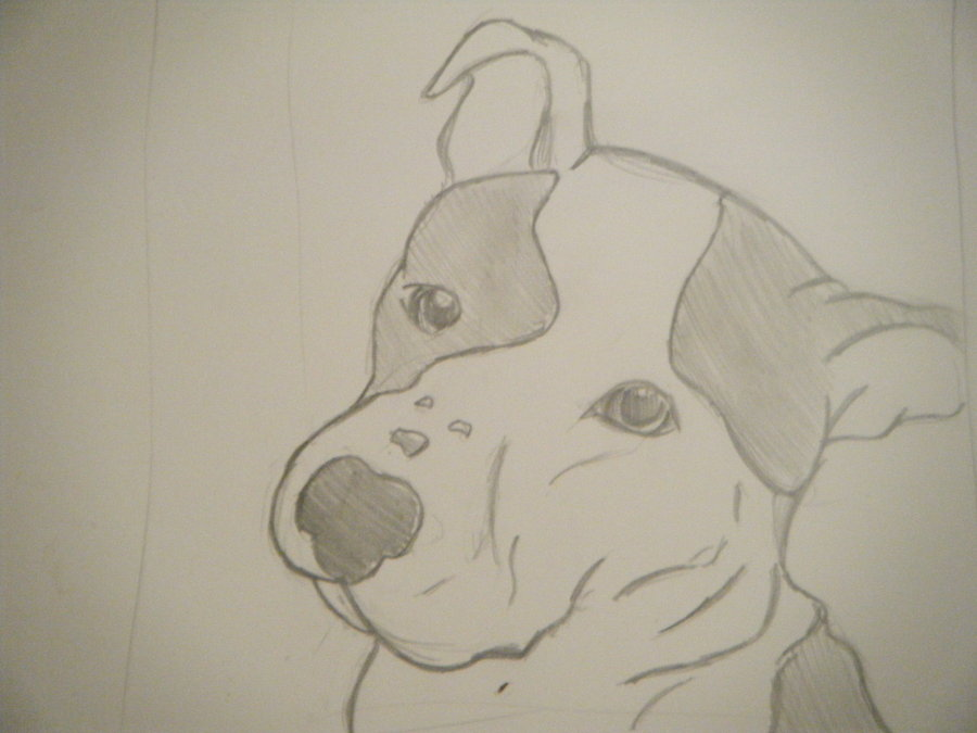 900x675 Pitbull drawings in pencil Embroidery Drawings