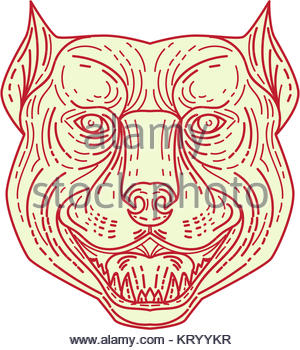 300x350 Pitbull Dog Mongrel Head Drawing Stock Vector Art Amp Illustration