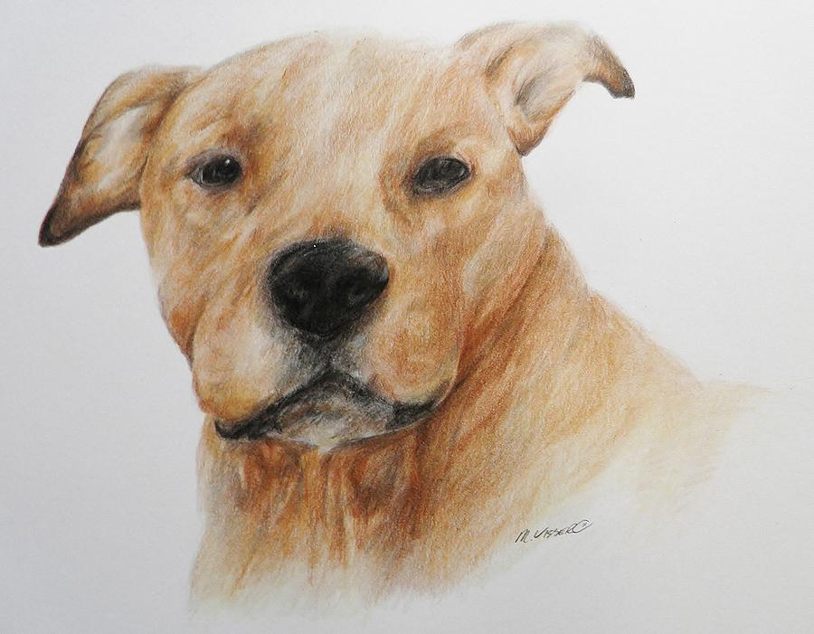 900x701 Pitbull Head Study Drawing By Meagan Visser