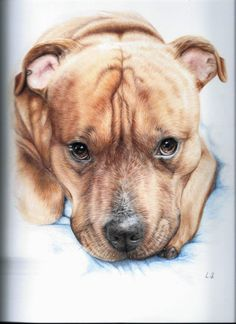 236x324 Baby Pitbull, Drawing By Reco Washington Art