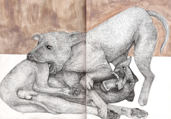 250x174 Fighting Dogs, Dog Fights, Pit Bulls Micro Pen Drawing By