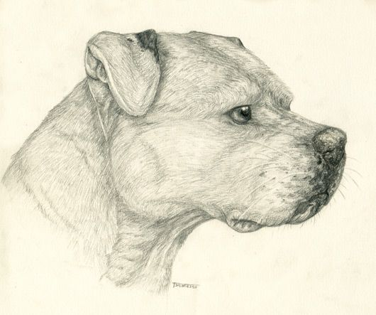 530x443 Free Pitbull Drawings Free Pit Bull Pup Lineart By Canidaeking