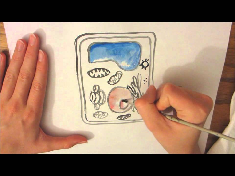 960x720 A Plant Cell Drawing