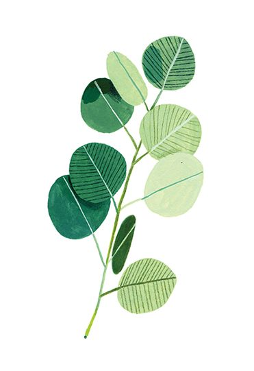 371x541 Drawn Plant Artistic