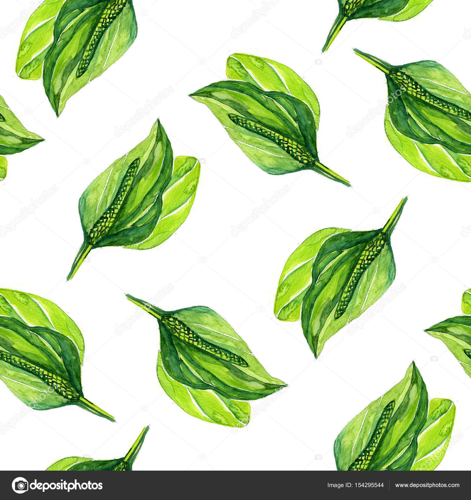 1600x1700 Hand Drawn Watercolor Botanical Illustration Of The Plantain Plant