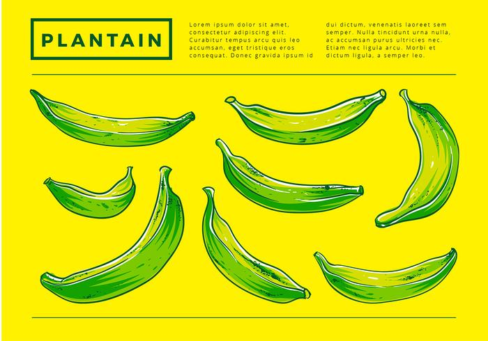700x490 Plantain Hand Drawing Free Vector