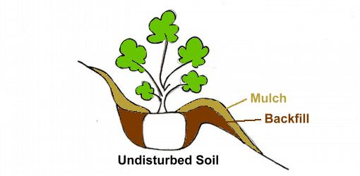 510x250 How To Plant Trees And Shrubs On A Slope Or Hillside Today'S