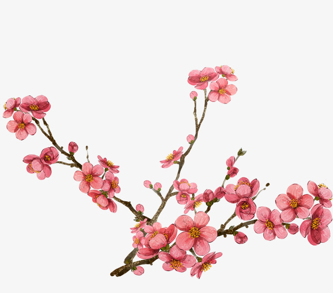 650x572 Pink Plum Blossom Design, Pink, Plum Flower, Drawing Elements Png