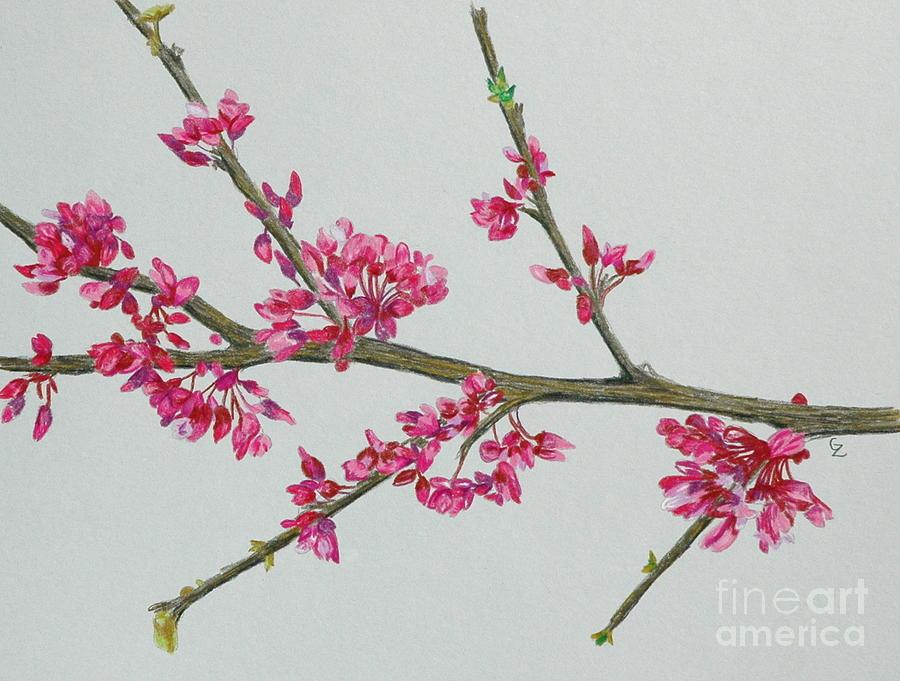 900x681 Plum Blossom Drawing By Glenda Zuckerman
