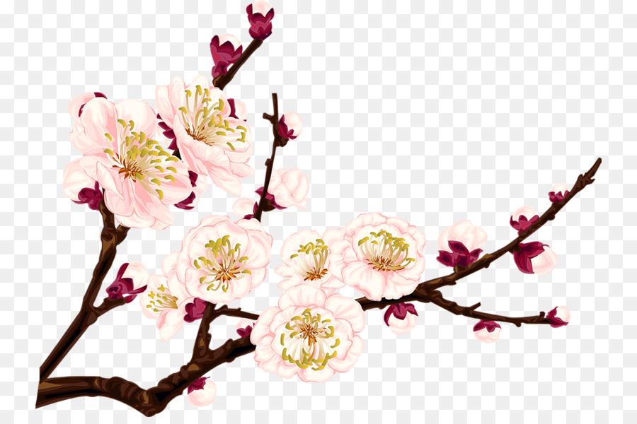 900x600 Plum Blossom Drawing Clip Art
