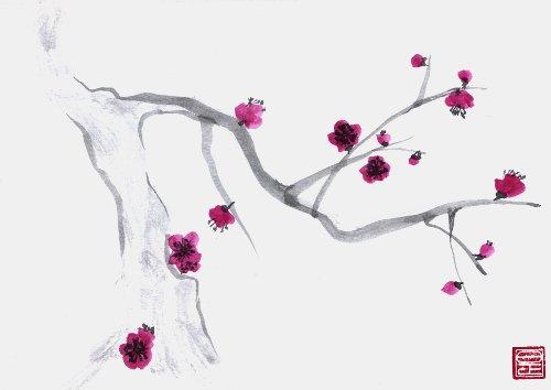 500x354 Plum Blossom Drawing Seventh Tat's A Charm