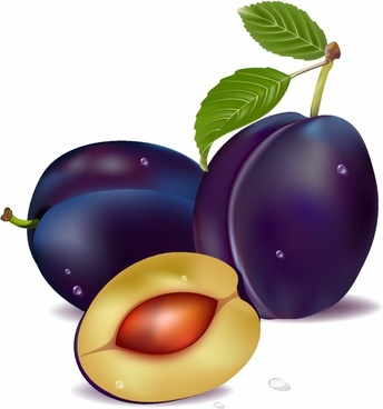 344x368 Plum Fruit Drawing Free Vector Download (91,297 Free Vector)