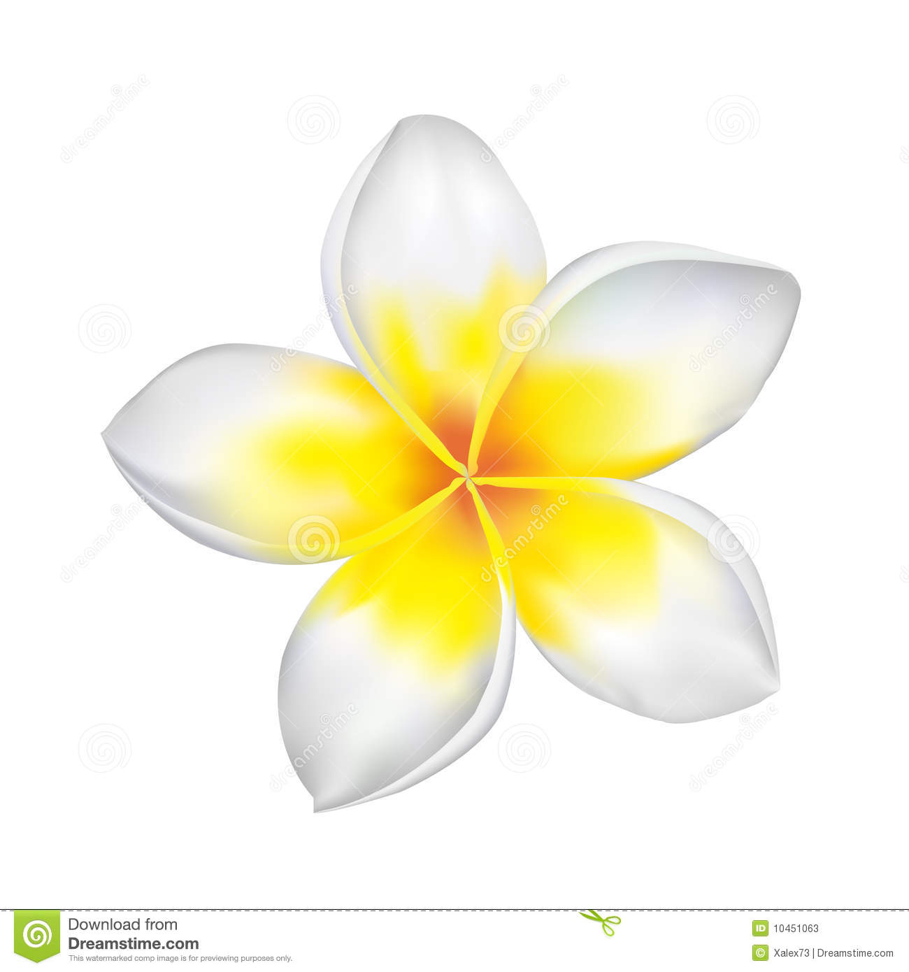 Plumeria Flower Drawing At Getdrawings Free Download