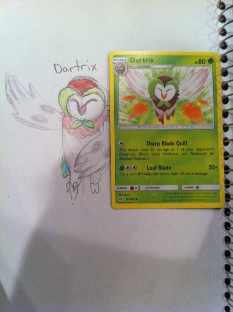 764x1024 Dartrix Drawing Amino
