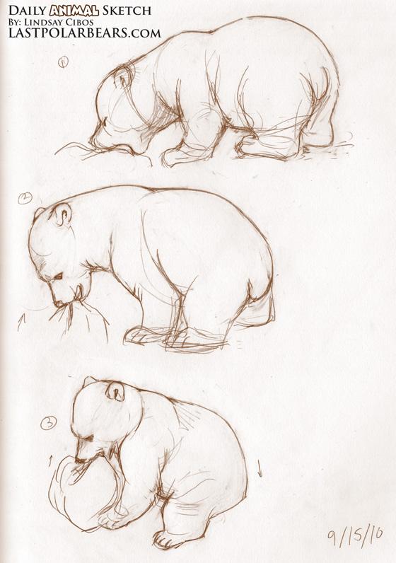 560x796 Daily Animal Sketch Polar Bear Cub Knut (3) Last