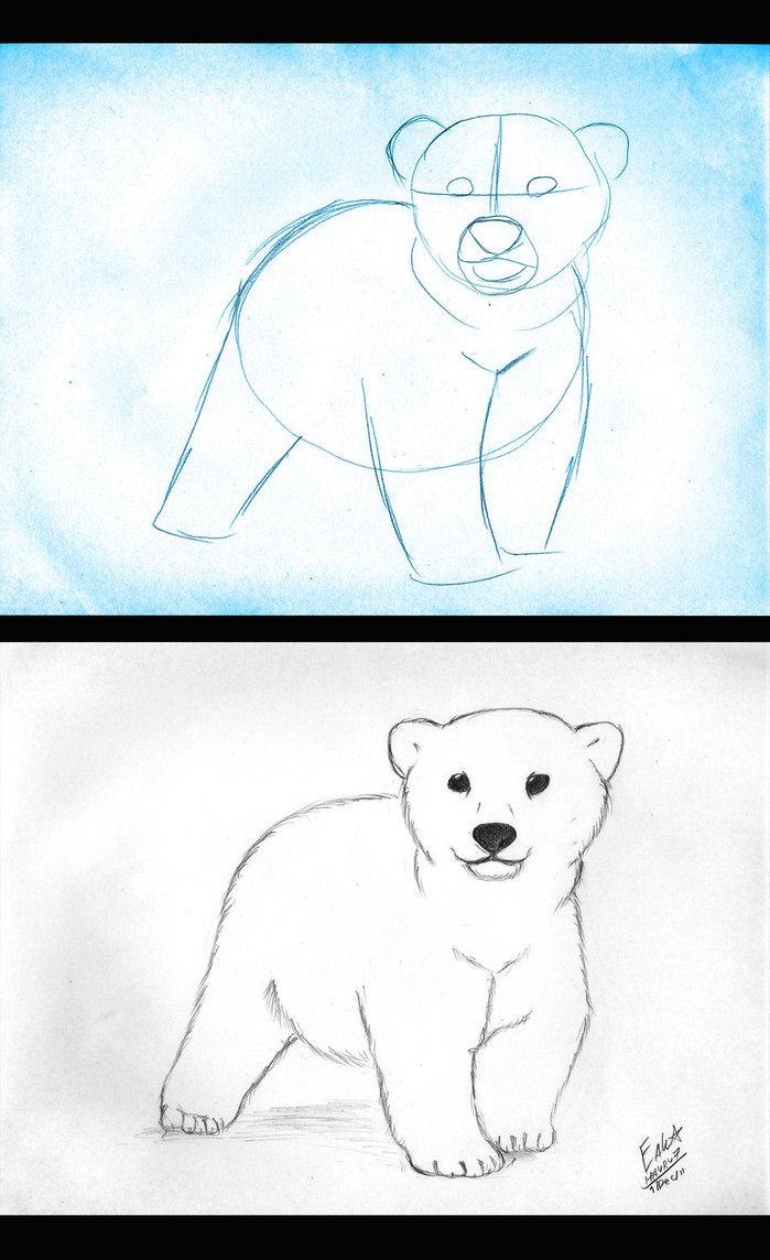 699x1144 How To Draw Polar Bear Cub By Hauru7