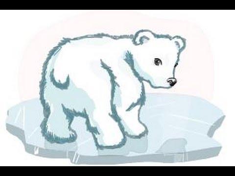480x360 How To Draw A Baby Polar Bear