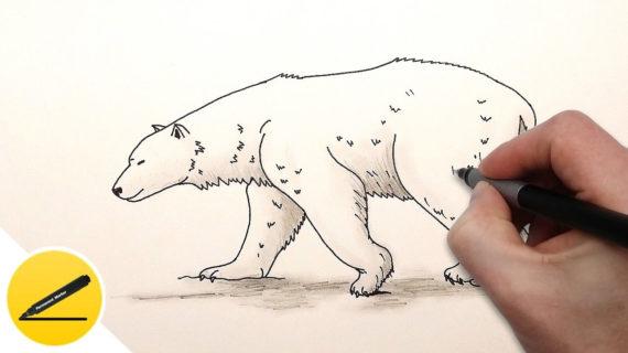570x320 Polar Bear Drawing Step By Step How To Draw A Polar Bear Cub