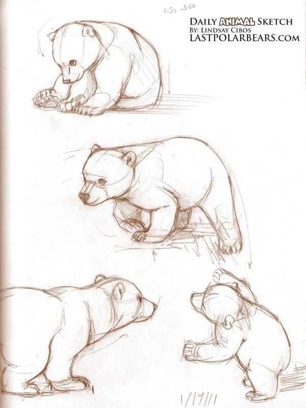 600x799 Sketching Brown Bears