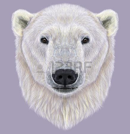 how to draw a polar bear face