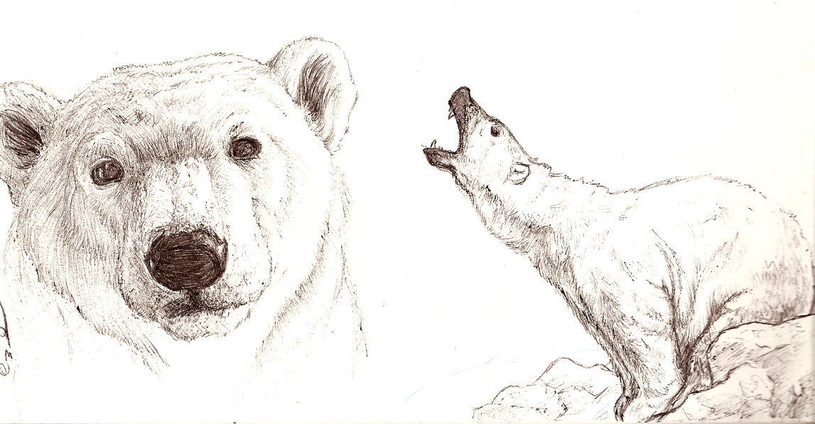 1147x597 Sketching Bear Cubs Polar Bear Sketches By Kyndrii