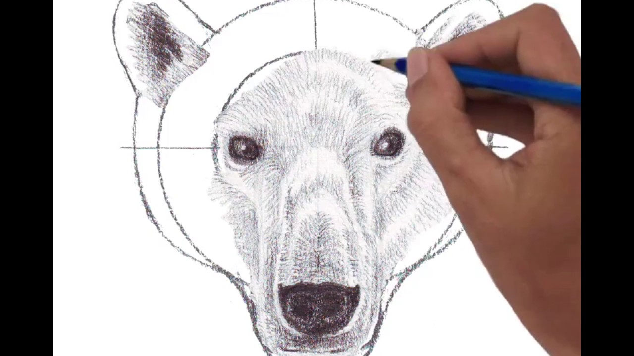 1280x720 Head Of Polar Bear Front View