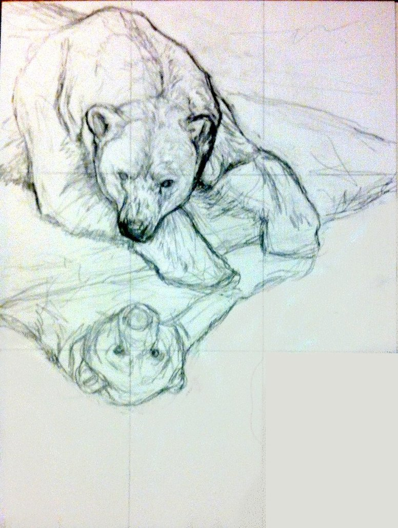 776x1029 Polar Bear