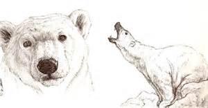 300x156 Polar Bear Drawing