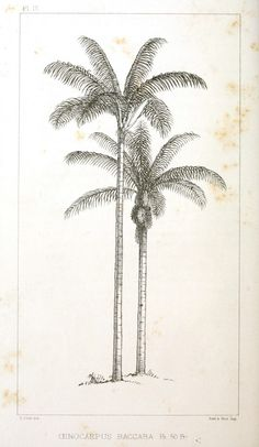 236x406 Great Sketch Of Palm Trees Beach Illustrations And Photography