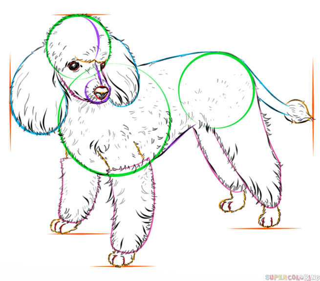 655x575 How To Draw A French Poodle Step By Step Drawing Tutorials