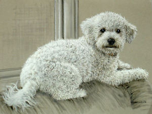 300x224 Original Pastel Drawing Cute White Poodle Puppy Dog Sally Porter