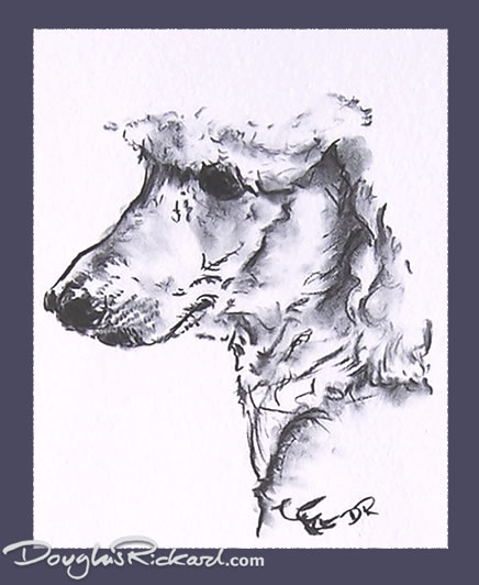 436x532 Poodle Drawing
