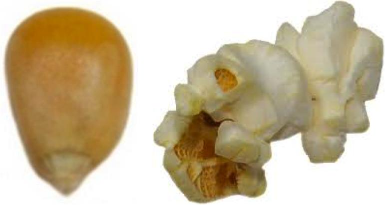 One Popcorn Kernel
