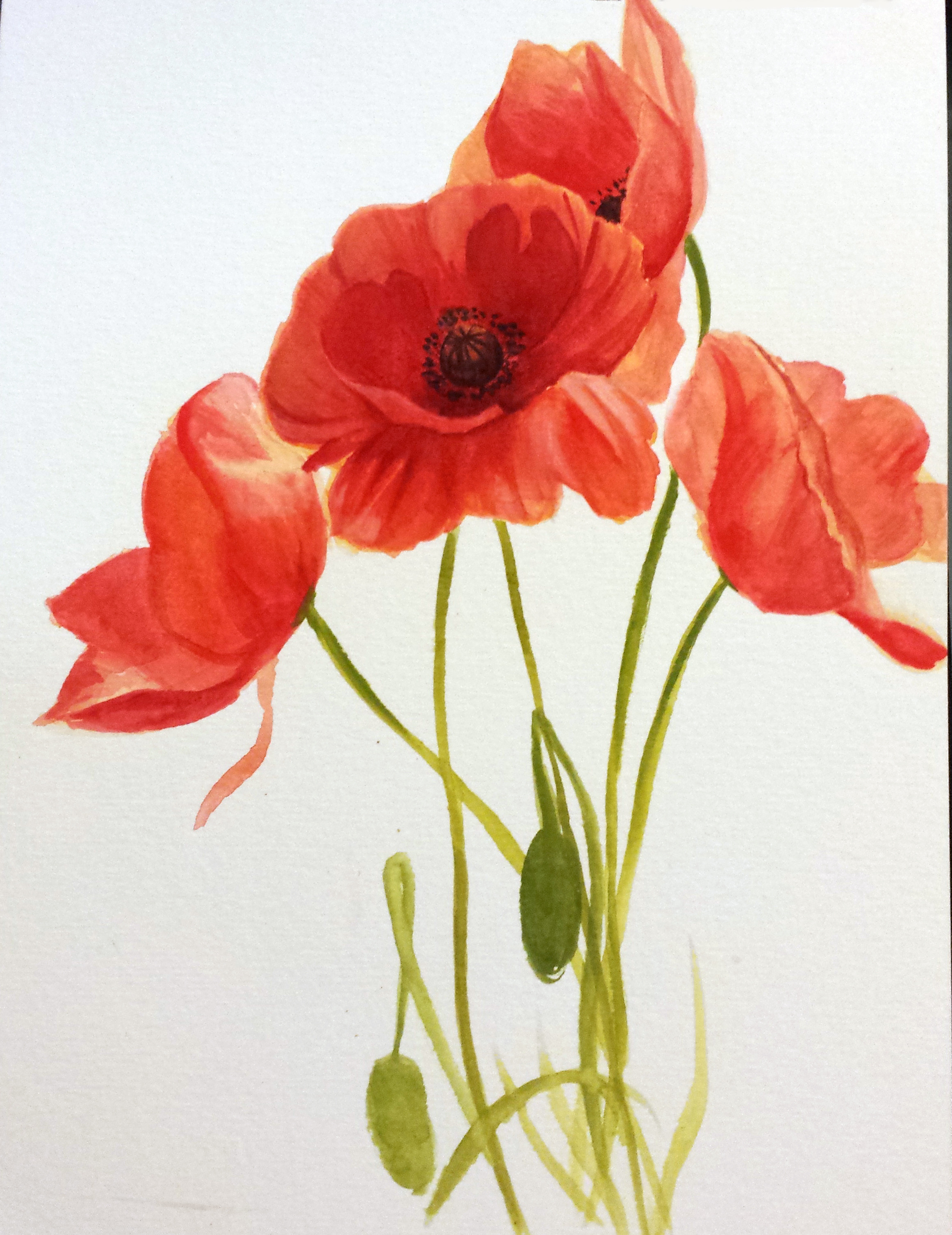 Poppies drawing at getdrawings free for personal use poppies 2322x3012 complete drawing of poppy flower april 21st week day 1 the mightylinksfo Image collections