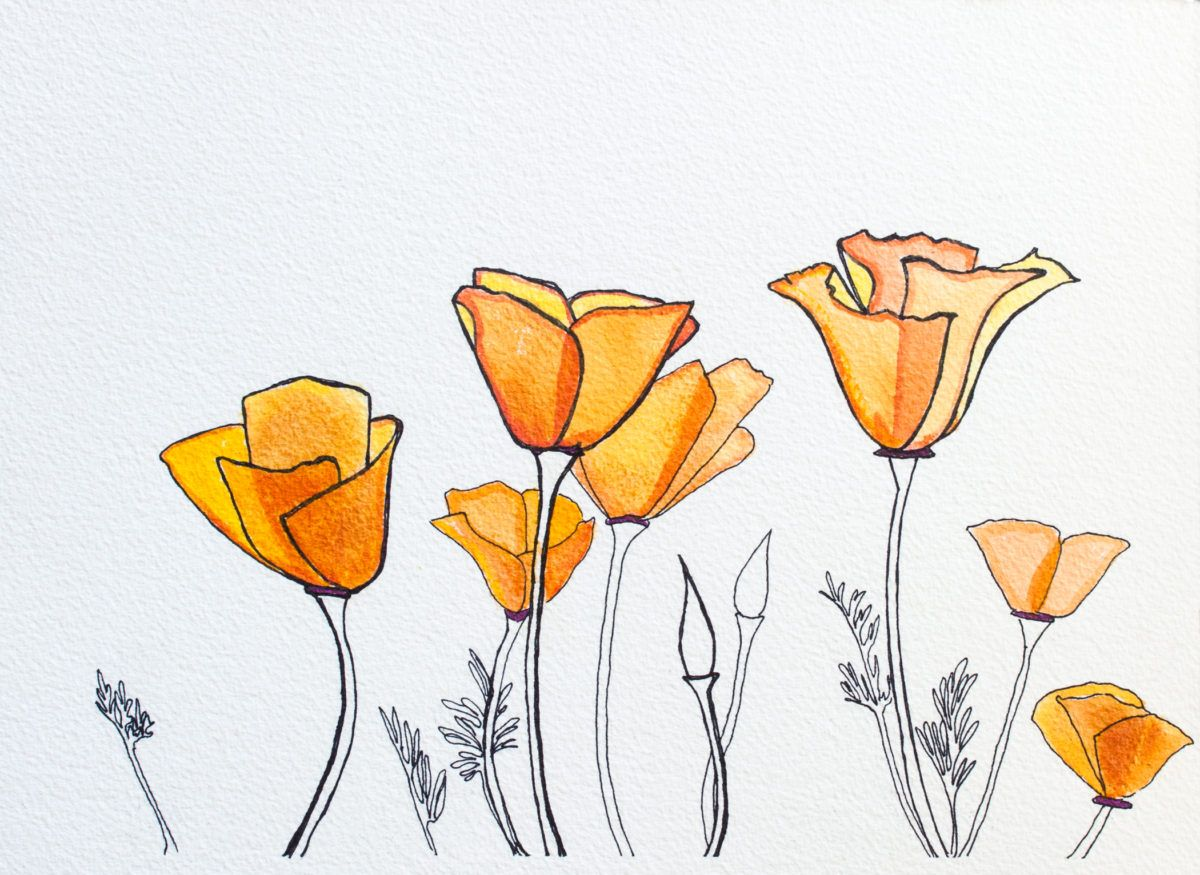 1200x875 Image Result For Stylized California Poppy Drawing Playground