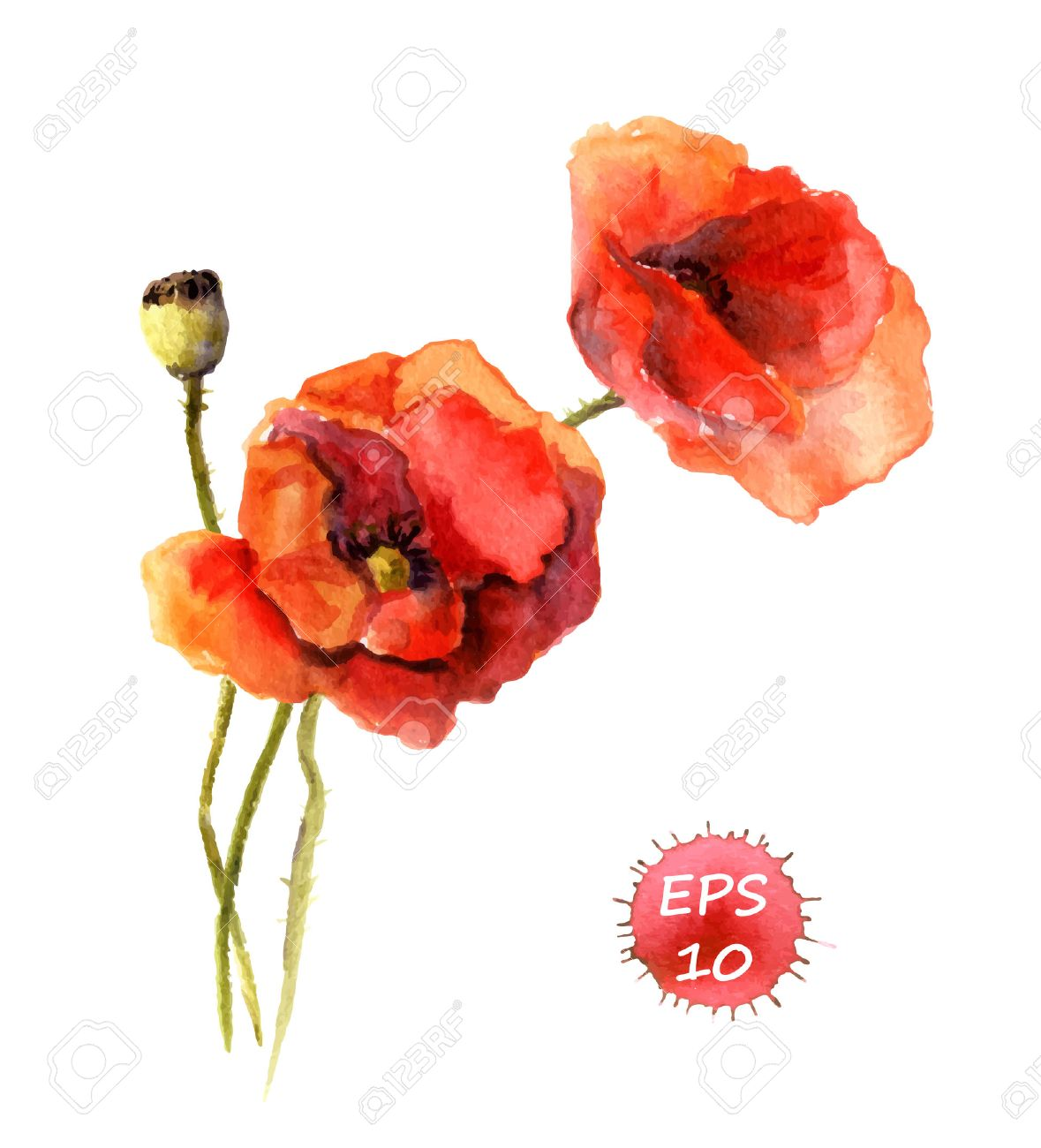 Poppy drawing at getdrawings free for personal use poppy 1179x1300 poppy flower isolated watercolor hand drawing vector royalty free mightylinksfo